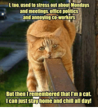 Memes, 🤖, and Coworking: l, too, used to stress outabout Mondays  and meetings, office politics  and annoying co-workers  But then Iremembered that Im a cat.  I can just stay home and chill all day! I too used to stress out about Mondays and meetings, office politcs and annoying coworkers, but then I remembered I am a cat. I can just stay home and chill all day         MOL   #cat
