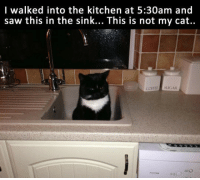 <p>Unexpected Encounter.</p>: l walked into the kitchen at 5:30am and  saw this in the sink... This is not my cat..  COFEE SUGAR <p>Unexpected Encounter.</p>