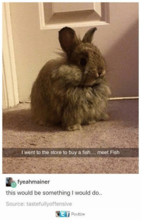 Memes, Fish, and 🤖: l went to the store to buy a fish  meet Fish  fyeahmainer  this would be something I would do..  Source: tastefully offensive  TEf Postize