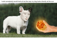"""Reddit, Sun, and Dog: l wish somebody would look at me the way my dog looks directly at the sun. <p>[<a href=""""https://www.reddit.com/r/surrealmemes/comments/7igx9k/%E1%8A%97%E1%8B%90%E1%8B%90%E1%8B%95_%E1%8C%8C%E1%8B%90%E1%8C%8E/"""">Src</a>]</p>"""
