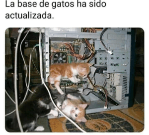 Base, Sido, and Gatos: La  base  de  gatos  ha  sido  actualizada