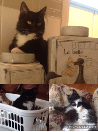 Collage, Girl, and Good: La belle  4  La corcinellc  PIC COLLAGE my baby girl alfred