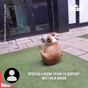 "Butt, Dank, and Bible: LA  D  BIBLE  ""SPOTTED A CHONK TRYING TO SCRITCH""  MATT VILIA BRODIE  [MATT VILIA BRODIE VIA STORYTRENDER BUTT SCRATCHER! 😂🐶"