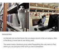 https://t.co/ju7USDUEHn: La  lesbianpirates:  my flatmate told me that theres this cat always around at the uni campus, often  in the library (it even has its own library card)  The owner made a facebook group called Pepspotting (the cats name is Pep)  where you can post pics of the cat if you see it somewhere https://t.co/ju7USDUEHn