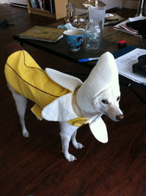 mistresswhile:  The best thing I ever bought was a banana costume for my dog. Hands down. It shames her so I put it on when we expect new people to come to our house and it keeps her from being crazy. She just stands there. : La7 mistresswhile:  The best thing I ever bought was a banana costume for my dog. Hands down. It shames her so I put it on when we expect new people to come to our house and it keeps her from being crazy. She just stands there.