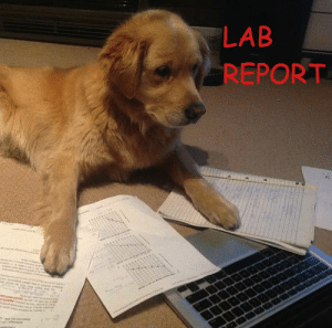 LAB REPORT | Lab Report Meme on ME ME