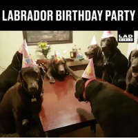 Ok, I definitely need an invite to this party! 😂🐶 @chelseyschocolates: LABRADOR BIRTHDAY PARTY  LAD  BIBLE Ok, I definitely need an invite to this party! 😂🐶 @chelseyschocolates