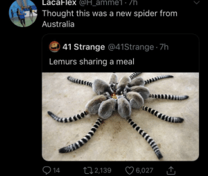 You never know with the Texas of the British Empire: LacaFlex @H_amme1 . /h  Thought this was a new spider from  Australia  41 Strange @41 Strange 7h  Lemurs sharing a meal  14  12,139  6,027 You never know with the Texas of the British Empire
