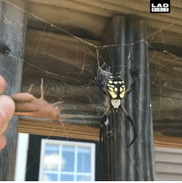 Crazy, Memes, and Spider: LAD  BIB L E A giant spider gets fed. Nature is crazy! 😧🕷️