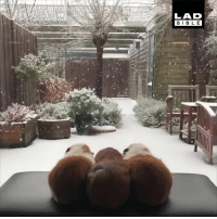Dank, Winter, and 🤖: LAD  BIB L E These guinea pigs are mesmerised by their own Winter Wonderland!  ❄️☃️