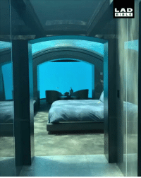 Memes, Hotel, and 🤖: LAD  BIBL E I NEED to stay in this underwater hotel on the Conrad Maldives Rangali Island 🌊🐠🐟 - @elindhomie