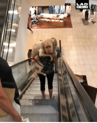 'Saw this dog today. Don't think he likes escalators': LAD  BIBL E 'Saw this dog today. Don't think he likes escalators'
