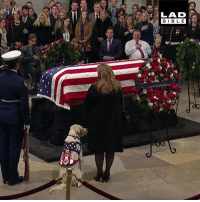 Dank, 🤖, and Dog: LAD  BIBL E Sully, George H.W. Bush's service dog, stayed by his side until the very end to pay his final respects ❤️