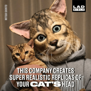 Dank, Never, and 🤖: LAD  BIBL E  THIS COMPANY CREATES  SUPER REALISTIC REPLIDASOR  YOUR CAT'SHEAD Something cat lovers never knew they needed until now... 😂😂