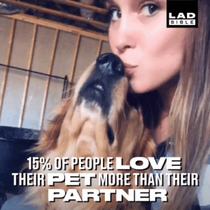'Pets are the only third wheel we'd ever allow in any relationship' 😂: LAD  BIBLE  15% OFPEOPLELO  THEIH PET MURE THAN THEIR  PARTNER 'Pets are the only third wheel we'd ever allow in any relationship' 😂