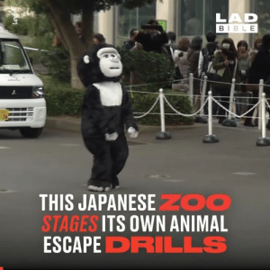 Animals, Dank, and Animal: LAD  BIBLE  -36  THIS JAPANESEZOO  STAGES ITS OWN ANIMAL  ESCAPE DRILLS  AP] This Japanese zoo's escape drills involve workers dressing up as animals and wreaking absolute havoc 😂👏