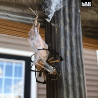 Crazy, Dank, and Spider: LAD  BIBLE A giant spider gets fed. Nature is crazy! 😲🕷️