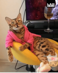 Actual footage of me now that I've finished for Christmas 😂🎄  Angel Bengal: LAD  BIBLE Actual footage of me now that I've finished for Christmas 😂🎄  Angel Bengal