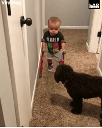 Memes, Bible, and Awesome: LAD  BIBLE  ARID 'Look Maggie, I'm walking!' This kid is awesome!