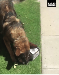 Dank, Bible, and 🤖: LAD  BIBLE 'Can't tell if he likes his new toy or hates it' 😂🐶
