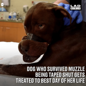 This dog had her muzzle taped shut with electrical tape. Caitlyn was rescued and had the best day ever, which included visiting a room full of toys 🎁😃  BARK: LAD  BIBLE  DOG WHO SURVIVED MUZZLE  BEING TAPED SHUT GETS  TREATED TO BEST DAY OF HER LIFE This dog had her muzzle taped shut with electrical tape. Caitlyn was rescued and had the best day ever, which included visiting a room full of toys 🎁😃  BARK