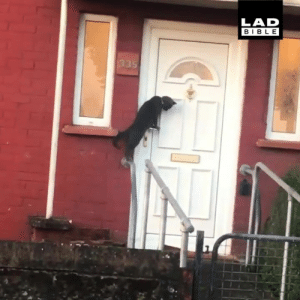 'Either I'm going mad or that cat just knocked on the door' 😹😹: LAD  BIBLE 'Either I'm going mad or that cat just knocked on the door' 😹😹