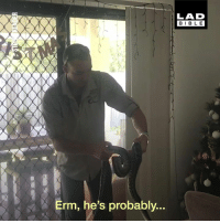 Christmas, Dank, and Australia: LAD  BIBLE  Erm, he's probably... 'WAIT! THAT'S NOT TINSEL!' Christmas in Australia looks intense 🐍😱