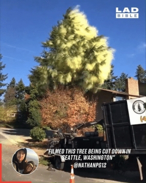 "I sneezed uncontrollably after just watching this 🌳🤧: LAD  BIBLE  ""FILMED THIS TREE BEING CUT DOWN-IN  SEATTLE, WASHINGTON""  @NATHANPG12  SAD I sneezed uncontrollably after just watching this 🌳🤧"