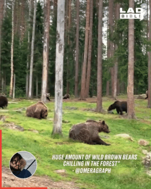 "This lad stumbled across a forest in Finland where brown bears roam freely 🐻🌲: LAD  BIBLE  HUGE AMOUNT OF WILD BROWN BEARS  CHILLING IN THE FOREST""  @OMERAGRAPH This lad stumbled across a forest in Finland where brown bears roam freely 🐻🌲"