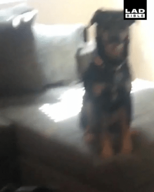 Dank, Dogs, and Family: LAD  BIBLE 'I had to call a 'family meeting' to discuss some issues with my dogs' 😂🐶