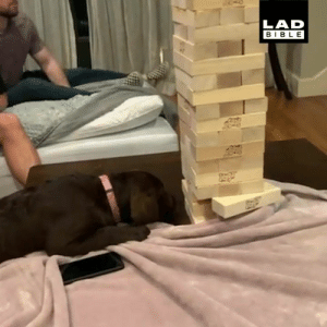 Dank, Bible, and Girl: LAD  BIBLE I wouldn't want to come up against this good girl at Jenga 👏