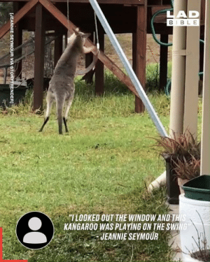 "Only in Australia... 🇦🇺: LAD  BIBLE  ""ILOOKED OUT THE WINDOW AND THIS  KANGAROO WAS PLAYING ON THE SWING  JEANNIE SEYMOUR  [JEANNIE SEYMOUR VIA STORYTRENDER]T Only in Australia... 🇦🇺"