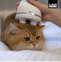 Dank, Bible, and 🤖: LAD  BIBLE I'm going to have to get my cat one of these 😂😁