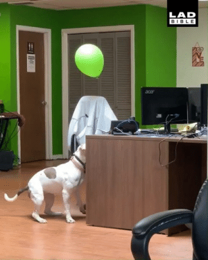 Dank, Work, and Bible: LAD  BIBLE 'In work today we had the ultimate combination, a dog and a balloon' 🐶🎈