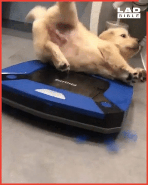 Is this the dog equivalent of a mechanical bull? 😂🐶: LAD  BIBLE Is this the dog equivalent of a mechanical bull? 😂🐶