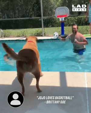 "Nothing but net! Get this dog in the NBA now! 😂🏀: LAD  BIBLE  ""JOJO LOVES BASKETBALL""  BRITTANY GOE Nothing but net! Get this dog in the NBA now! 😂🏀"