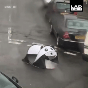 Dank, Streets, and Panda: LAD  BIBLE  NEWSFLARE A wild Panda Tent roams the streets looking for its next victim 🐼💨