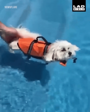 """Dank, Bible, and How To: LAD  BIBLE  NEWSFLARE """"I tried to teach my dog how to swim but he just decided to float for two hours"""" 😂😂"""