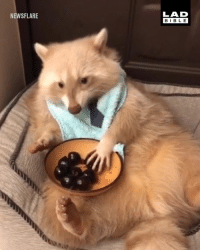 Just a friendly reminder to make sure you eat your 5-a-day... 🦝🍒: LAD  BIBLE  NEWSFLARE Just a friendly reminder to make sure you eat your 5-a-day... 🦝🍒