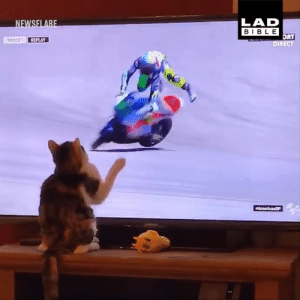 Dank, Bible, and Discover: LAD  BIBLE  ORT  DIRECT  Moto2 REPLAY The moment you discover your cat has evil powers... 😼😱  MotoGP