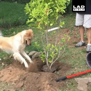 'Our dog loves to help with the gardening!' 😂🐶: LAD  BIBLE 'Our dog loves to help with the gardening!' 😂🐶