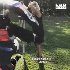 "Dank, Control, and Bible: LAD  BIBLE  ""RINGO SWIMS A LOT""  OWNER  [RINGO.SWIMS.ALOT This border collie can't control his excitement when around water 😂🌊"