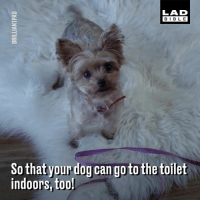 The worlds first self-cleaning dog toilet is here. Who needs one of these? 💩 (@brilliantpad_): LAD  BIBLE  So that yourdog can go to the toilet  indoors, too The worlds first self-cleaning dog toilet is here. Who needs one of these? 💩 (@brilliantpad_)