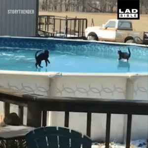 Cats, Dank, and Frozen: LAD  BIBLE  STORYTRENDER Just a couple of cats playing on a frozen pool... 😂🐱