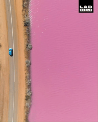 The bacteria in this lake in Australia causes it to turn pink 😍😍  Base Imagery: LAD  BIBLE The bacteria in this lake in Australia causes it to turn pink 😍😍  Base Imagery
