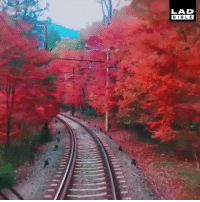 The route this train in Kyoto, Japan takes is beautiful 😍😱: LAD  BIBLE The route this train in Kyoto, Japan takes is beautiful 😍😱
