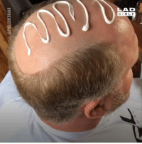 Dank, Bible, and 🤖: LAD  BIBLE These incredible toupees are a balding man's dream... 👱👇  Philip Ring