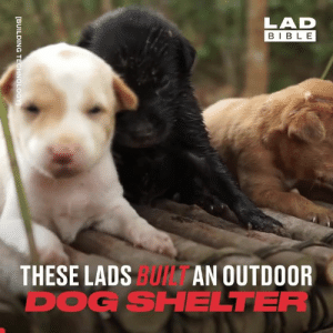 These guys wanted to do something brilliant for these abandoned puppies, so they built them a brand new home from scratch 👏👏: LAD  BIBLE  THESE LADS BUI AN OUTDOOR  DOG SHELTER  [BUILDING TECHNOLOGY These guys wanted to do something brilliant for these abandoned puppies, so they built them a brand new home from scratch 👏👏