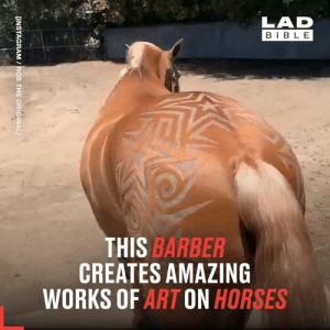 Not quite your average barber 😮👏  Rob The Original: LAD  BIBLE  THIS BARBER  CREATES AMAZING  WORKS OF ART ON HORSES  [INSTAGRAM /ROB THE ORIGINAL] Not quite your average barber 😮👏  Rob The Original