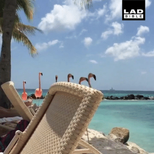 This beach in Aruba comes complete with its own flock of flamingos 😍: LAD  BIBLE This beach in Aruba comes complete with its own flock of flamingos 😍